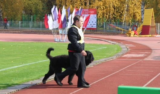 В Ижевске на стадионе «Купол» проходит фестиваль кинологического спорта