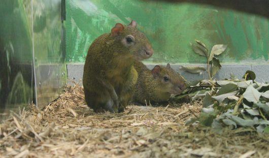 «Горбатые зайцы» появились в зоопарке Ижевска