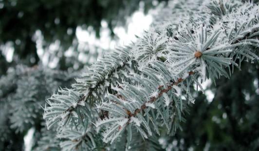 Синоптики предупреждают: вечером в Ижевске начнется снег с дождем