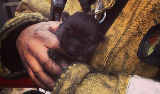 Сотрудники МЧС спасли на пожаре в ТЦ «Италмас» маленького щенка