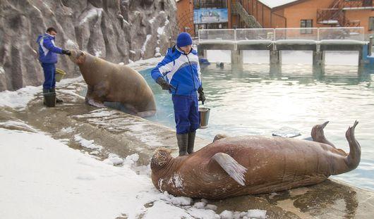 Тайны ижевского зоопарка: как живут морские котики и моржи