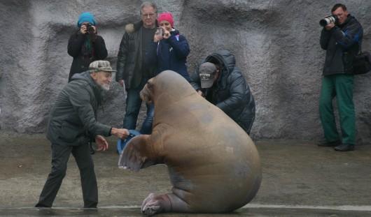 Ижевский зоопарк показали в программе «Лучшие зоопарки мира» Николая Дроздова