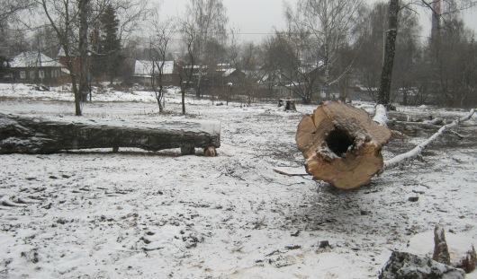 В Козьем парке в Ижевске спиливают старые деревья
