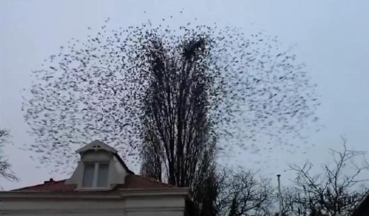 В Интернете стало популярным видео, на котором птицы устроили «флешмоб»