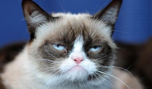 Самый угрюмый кот планеты зарабатывает больше Леонардо Ди Каприо и Анджелины Джоли