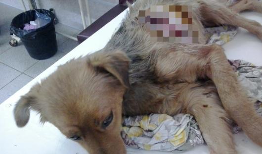 В Удмуртии хозяева пытались съесть собственную собаку