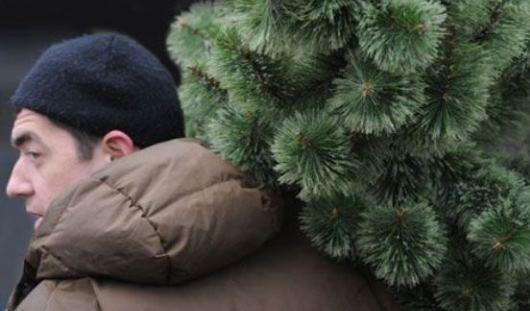 Приставы Татарстана арестовали елку