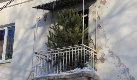 В Ижевске на одном из балконов «растет» сосна