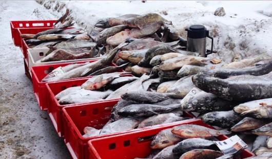 В центре Ижевска на улице торгуют замороженной рыбой, хранящейся не в морозильнике