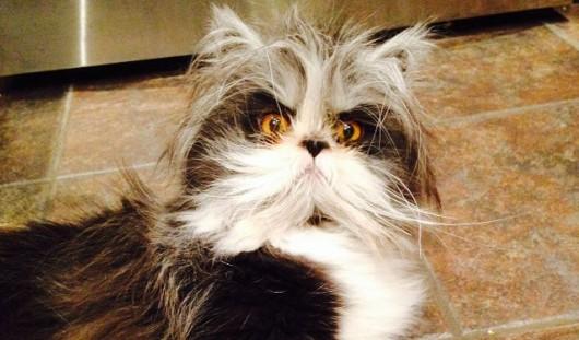 Новой «звездой» Интернета стал кот по кличке Чихун