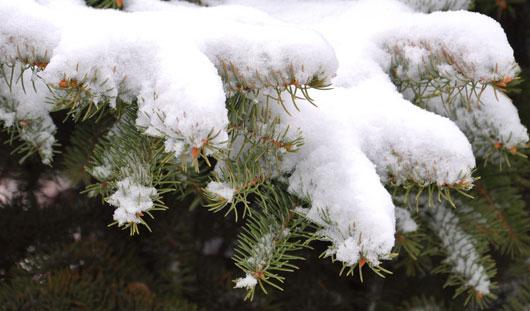 В выходные в Ижевске потеплеет до -2 градусов