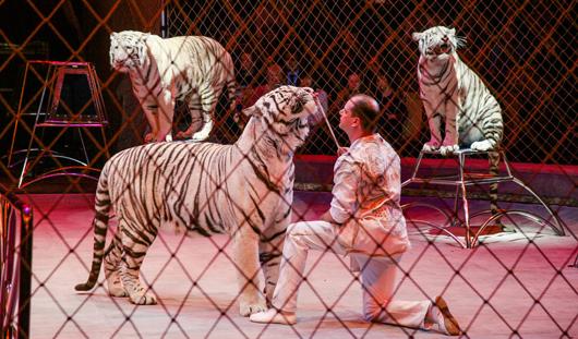 На цирковом фестивале в Ижевске вручили сразу 4 золотые награды