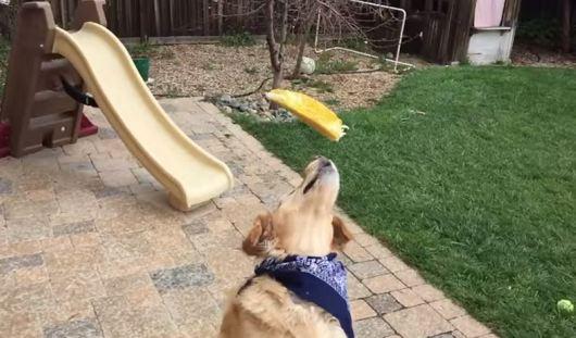 Звездой YouTube стал пес, который не смог поймать ни одно угощение