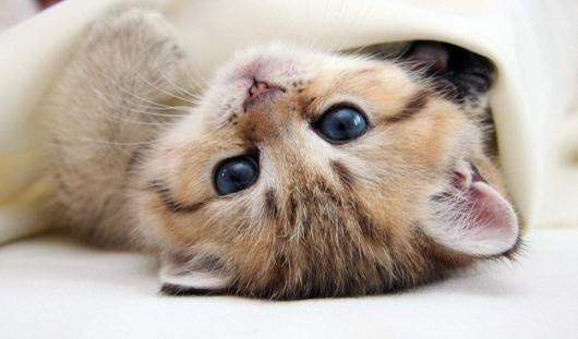 Международная выставка кошек «Апрельская капель»