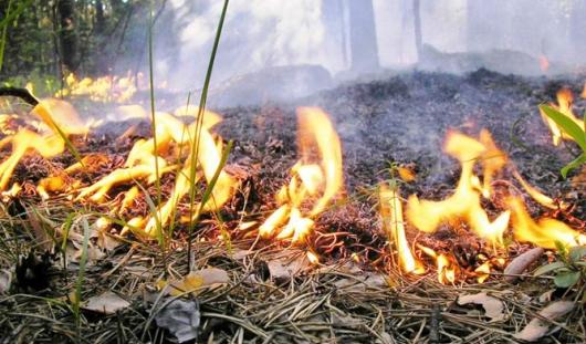 На улице Союзной в Ижевске горел лес