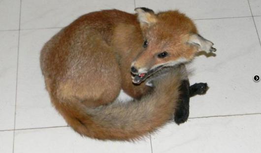 Приставы Удмуртии арестовали шкуры животных