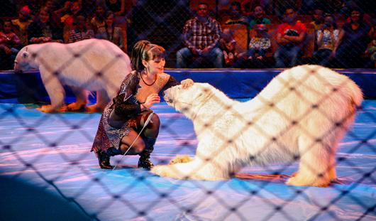 Белых медведей в цирке Ижевска кормят мороженым и арбузами