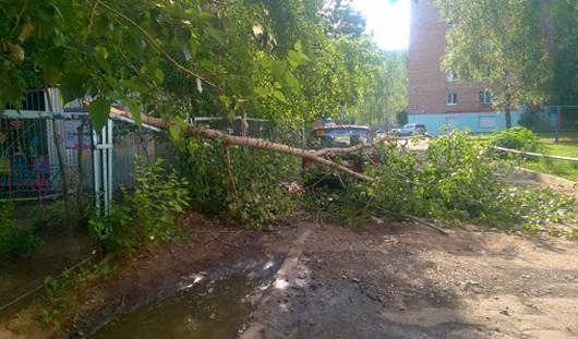 В Ижевске дерево упало на автомобиль