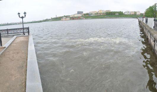 Количество сине-зеленых водорослей в Ижевском пруду превышает норму