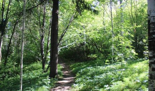 Во второй половине июля парк Кирова в Ижевске в третий раз обработают от клещей