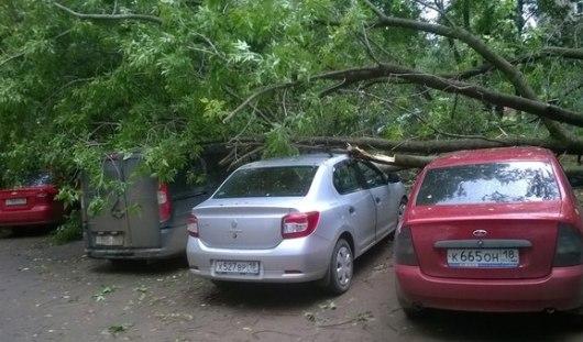 В Ижевске на четыре автомобиля упало дерево