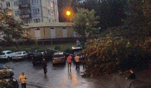 В Ижевске упавшее дерево свалило столб на припаркованные машины