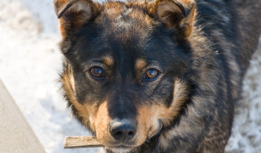 Куда обратиться ижевчанам, чтобы вызвать службу отлова бродячих собак?