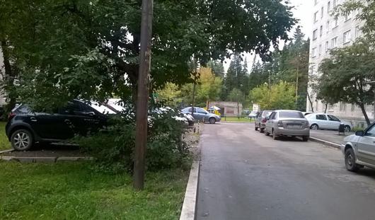 Застройка в зеленых зонах и расчлененный труп: о чем утром говорят в Ижевске