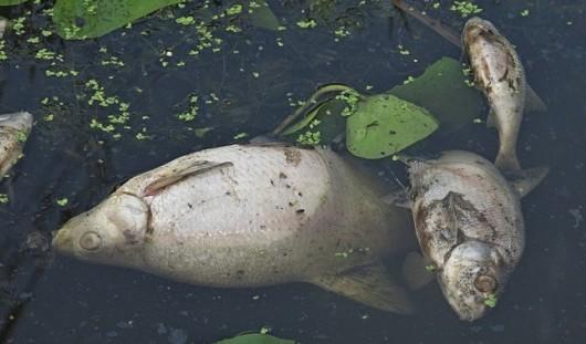 Рыба, погибшая в Вавожском районе, могла задохнуться