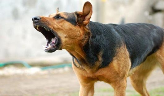 В Новом Уренгое собаки загрызли вахтовика из Удмуртии