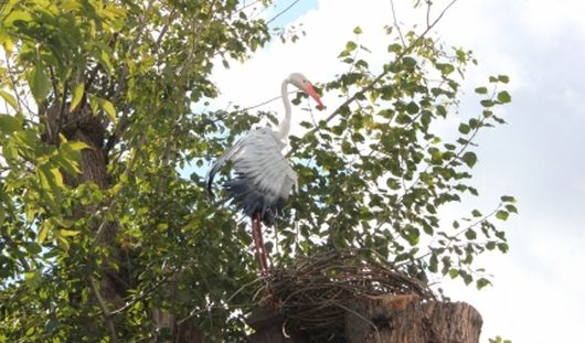 В Ижевске пожарные на дереве у своей части «поселили» аиста