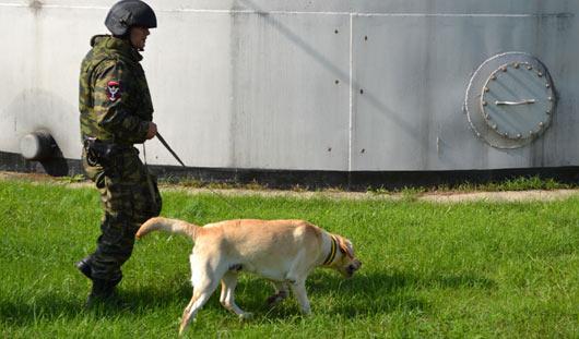В Пугачево завершена расчистка территории бывшего арсенала