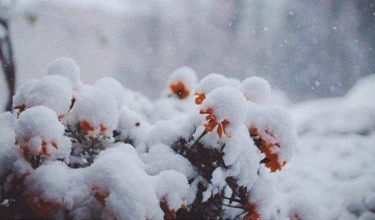 Как ижевчане встречали зиму в октябре