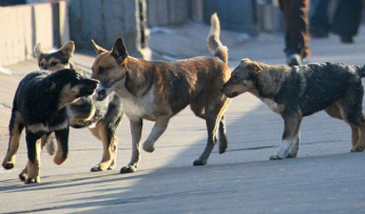 Подать заявку на отлов безнадзорных агрессивных животных в Ижевске можно по телефону 78-72-78