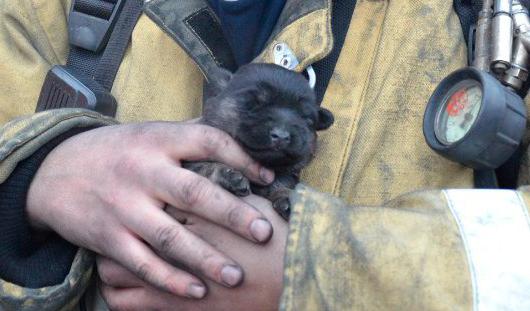 В конкурсе МЧС Удмуртии победил снимок щенка, которого вытащили из пожара в Ижевске