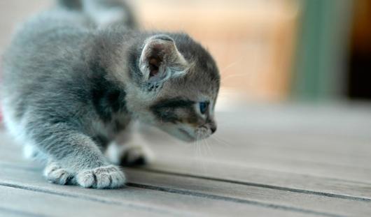 В Удмуртии котёнок спас хозяйку от бешеной ласки