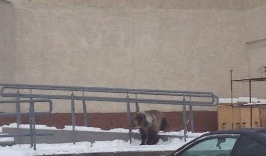 В Ижевске рядом с ДК «Редуктор» гулял медвежонок