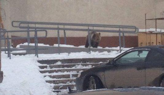 Медвежонок, гуляющий по Ижевску, и испытания «Булавы»: о чем утром говорят в городе