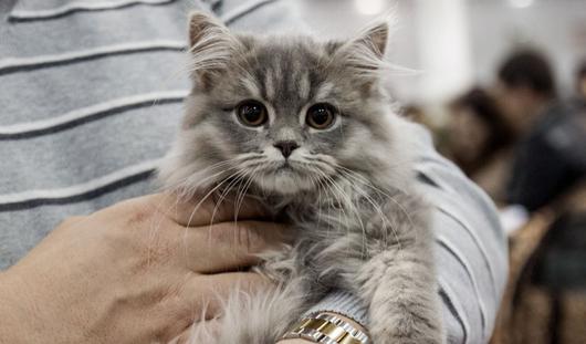 Выставка кошек, Жаркий Новый год, Баян МIX: отдых в Ижевске в выходные 28-29 ноября