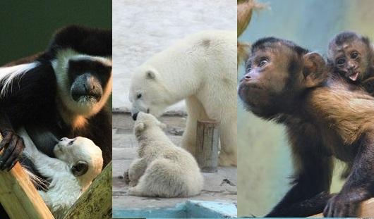 Изменения декабря и мамы ижевского зоопарка: о чем сегодня утром говорят в Ижевске