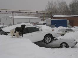 5 самых нелепых происшествий в Ижевске 2011 года