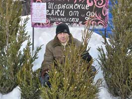 Где в Ижевске можно купить живую ель?