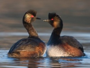 В США тысячи птиц перепутали асфальт с водоемом и разбились