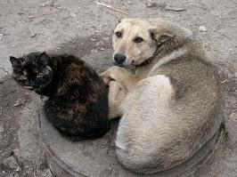 Ижевчан просят не выводить без присмотра на улицу собак