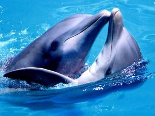 В США более 60 дельфинов выбросились на берег
