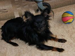 Ижевчанка, чью собаку убил бойцовский пес, будет отстаивать свои права в суде