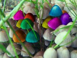 Ижевчане продали наркополицейскому галлюциногенных грибов