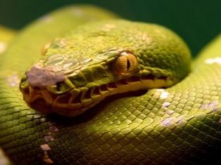 Годовалый малыш откусил голову змее, заползшей в детскую