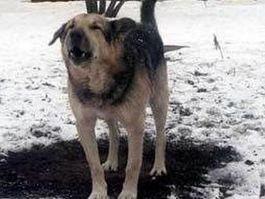 В Удмуртии бродячая собака помогла раскрыть грабеж