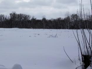 В Удмуртии после бурного застолья в поле замерзла пьяная женщина